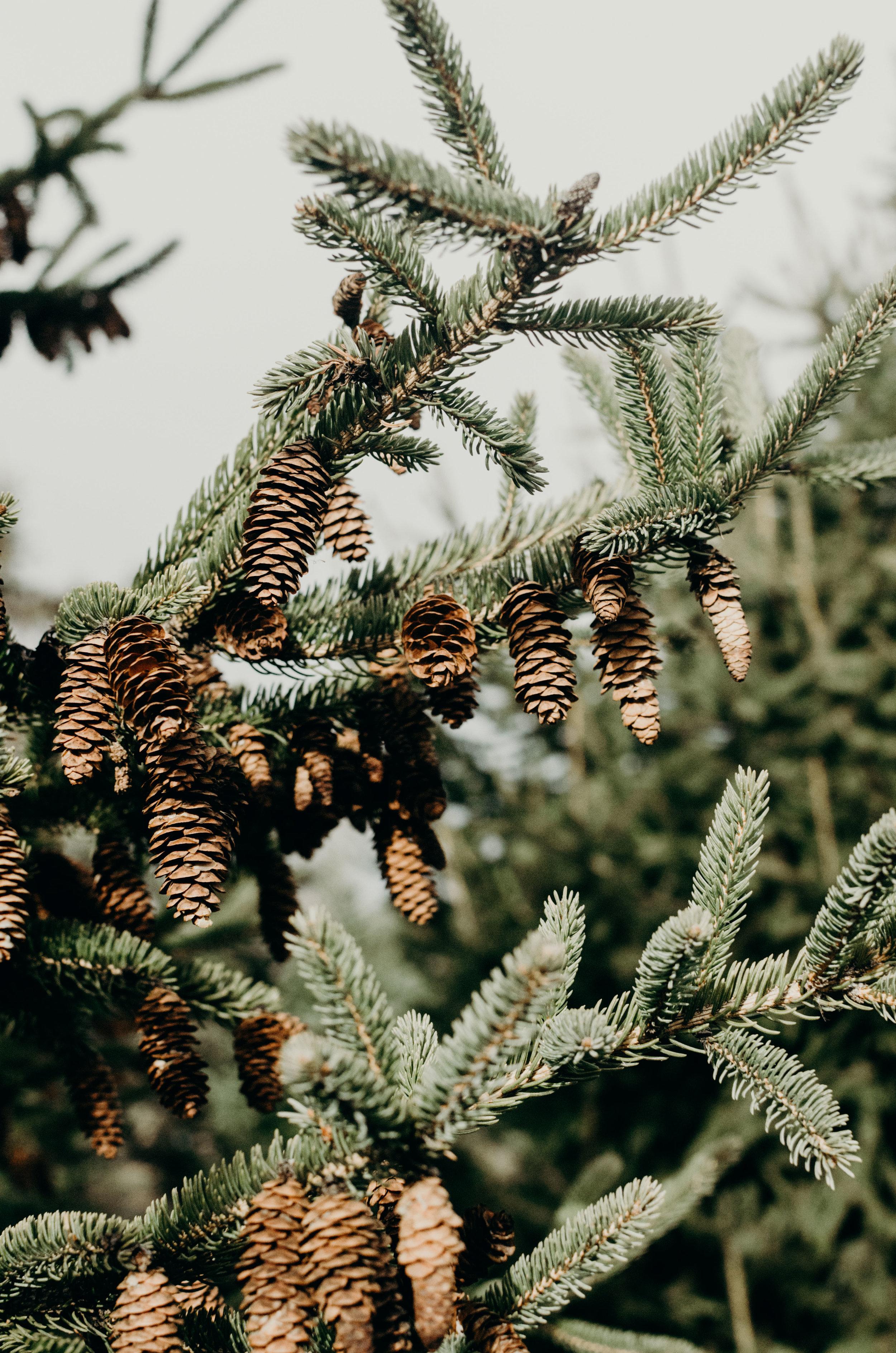 Wendling_Boyd_Tree_Hunt_2017-8.jpg