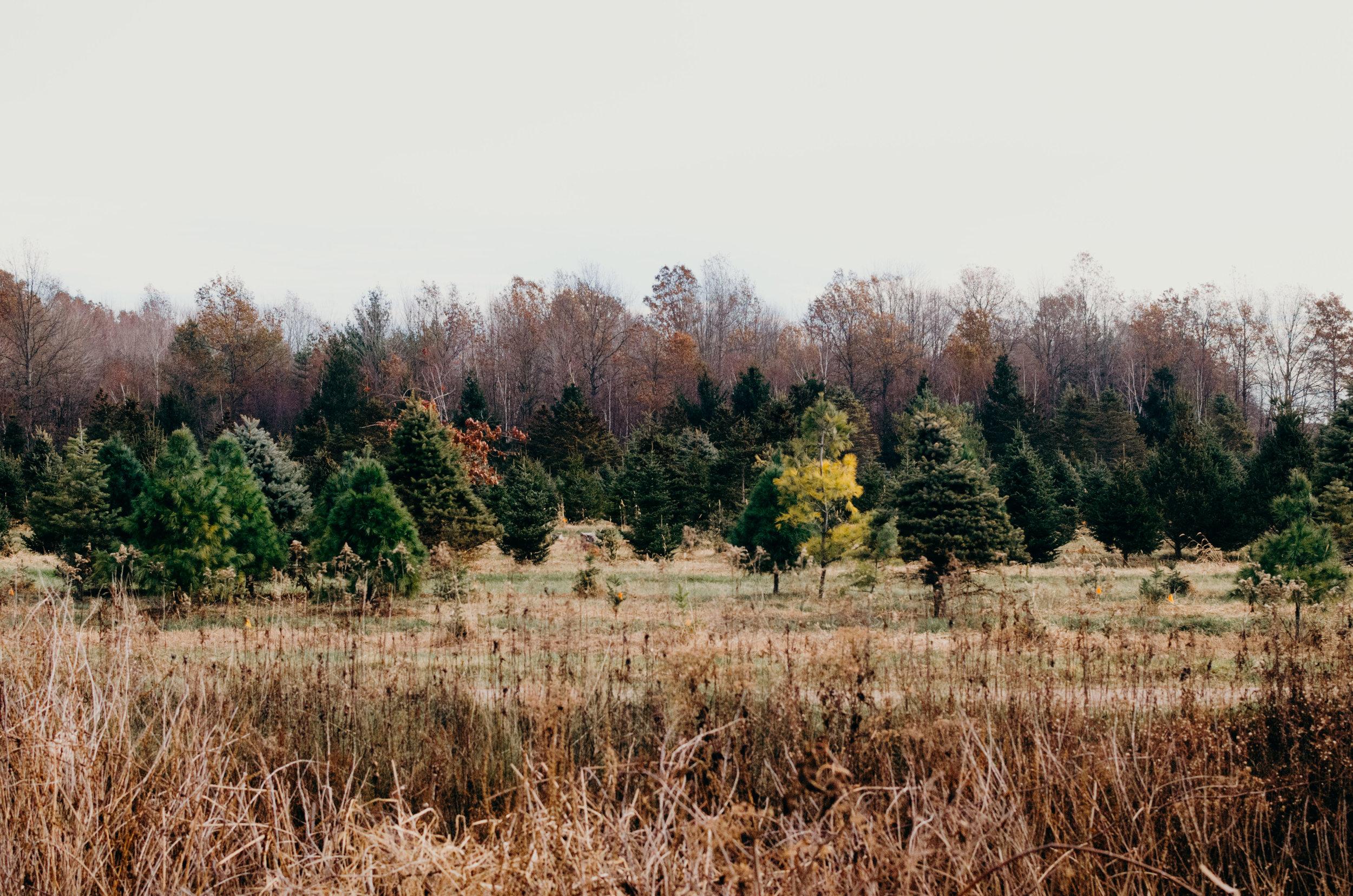 Wendling_Boyd_Tree_Hunt_2017-5.jpg