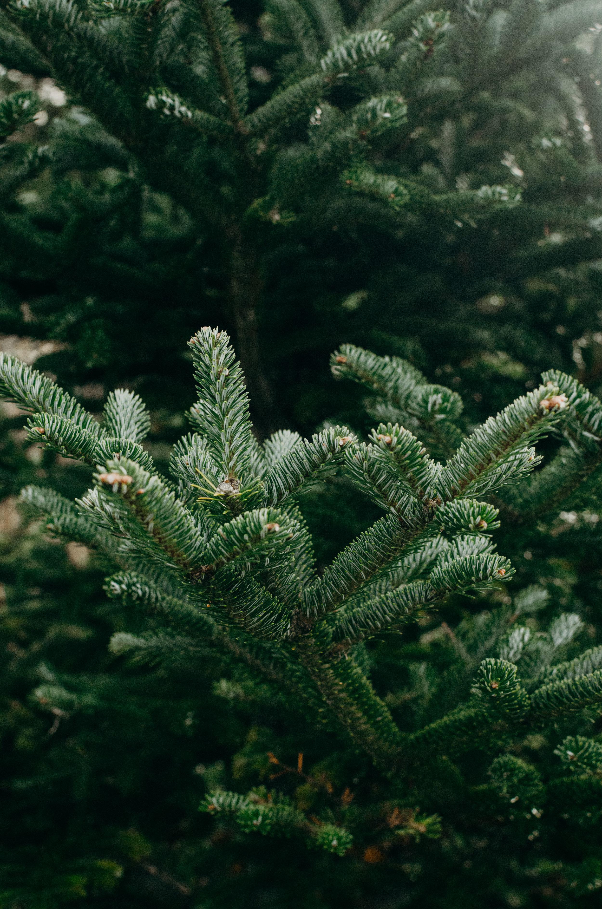 Wendling_Boyd_Tree_Hunt_2017-3.jpg