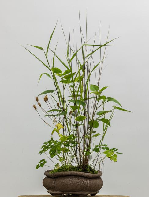 Potter: Jim Gremel (California)      Schizachyrium scoparium   ,  Carex flagellifera ,  Aquilegia canadensis , and  Eurybia divaricata