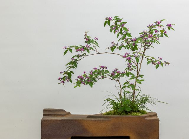 Potter: Ron Lang (Pennsylvania) 1st Prize Winner 2001-Non-Traditional Category       Lespedeza thunbergii   ,  Carex pensylvanica , and  Selaginella  sp.
