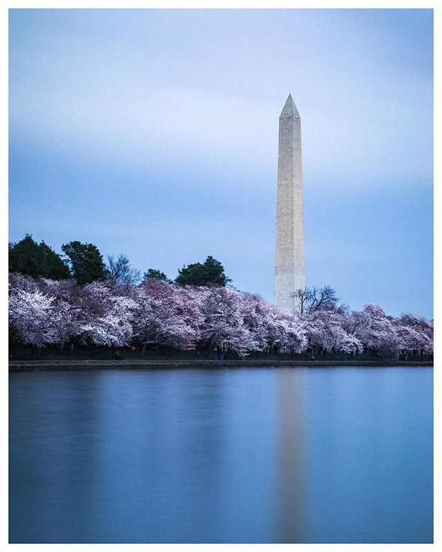 Cherry Blossom Season sponsored by my seasonal allergies.