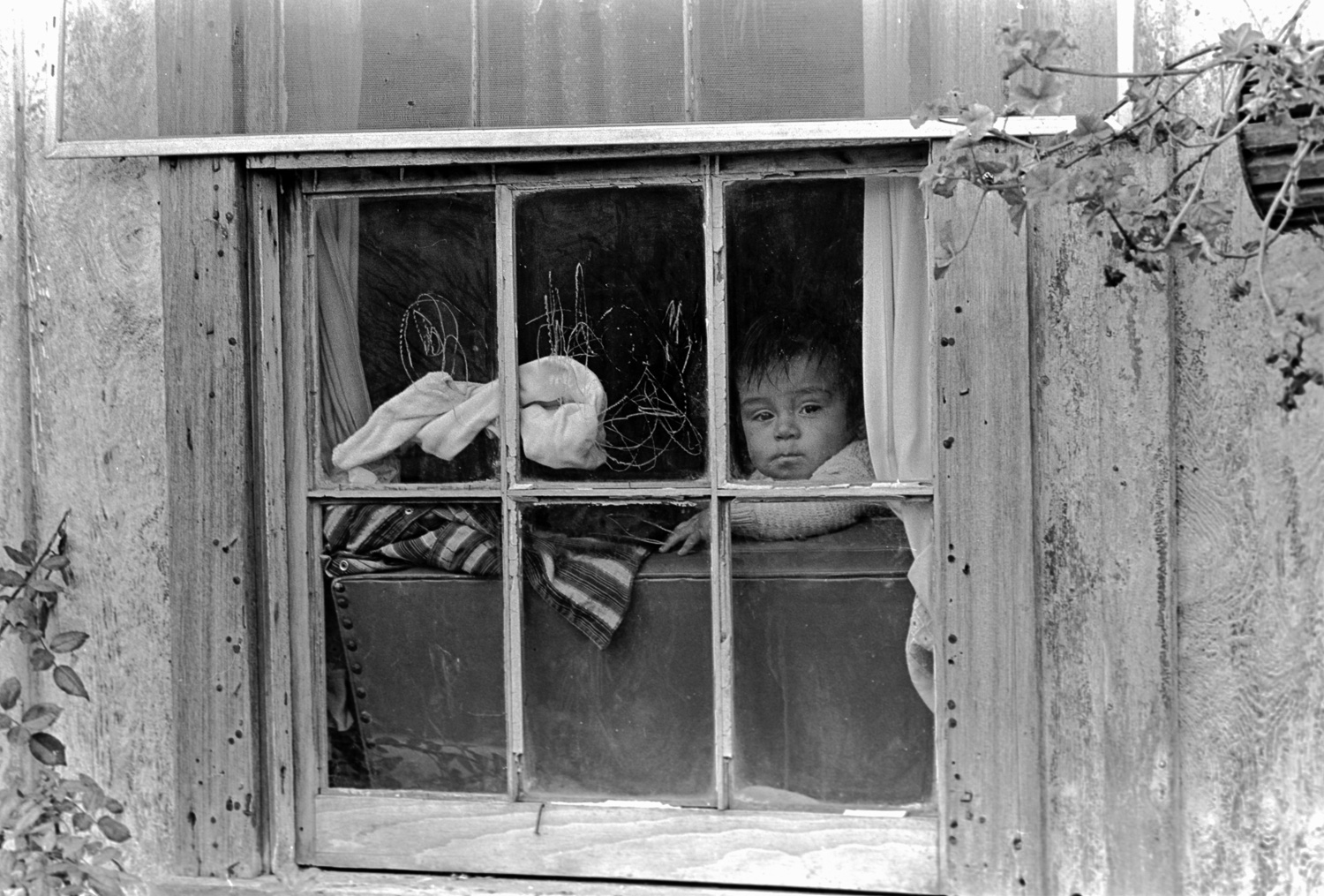 A baby gazes out a window in Watsonville, California. The family home is farm worker housing.