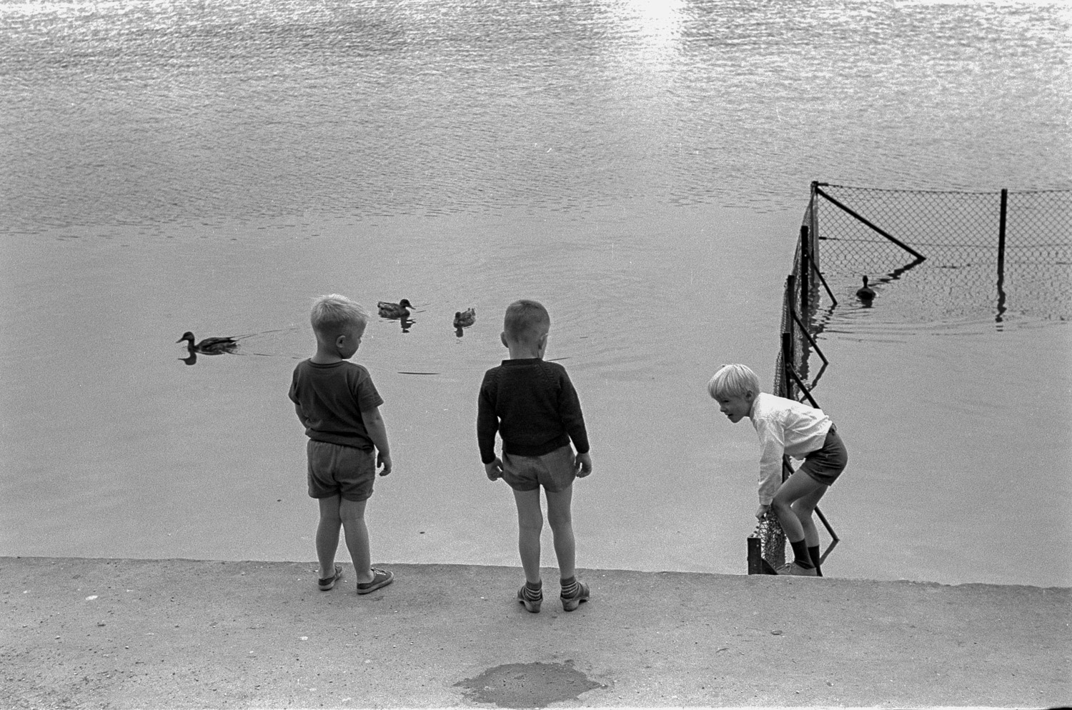 Three Danish boys are trying to get the attention of ducks.