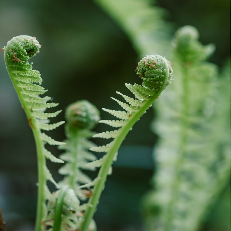 Greenery is in for 2017 Weddings. Why not make some unique ferns the star of your centerpiece show?