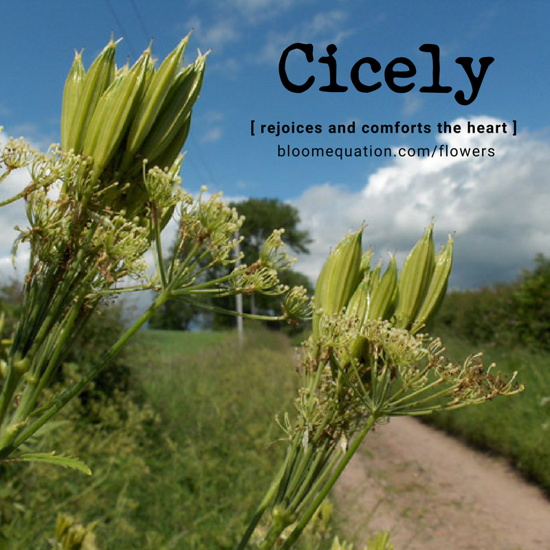 Cicely- rejoices and comforts the heart