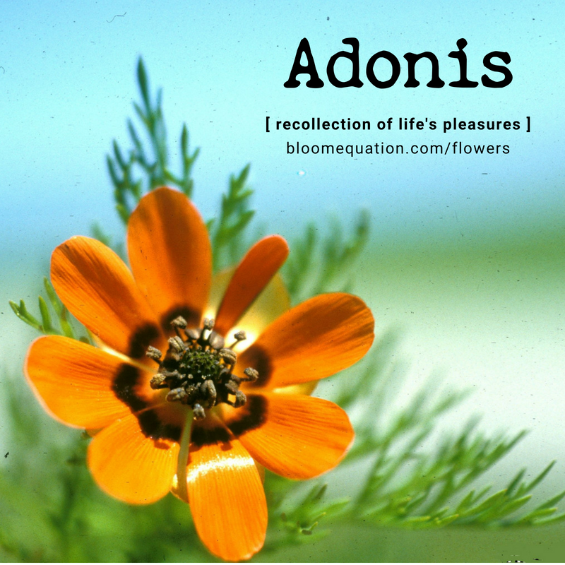 Adonis- recollection of life's pleasures
