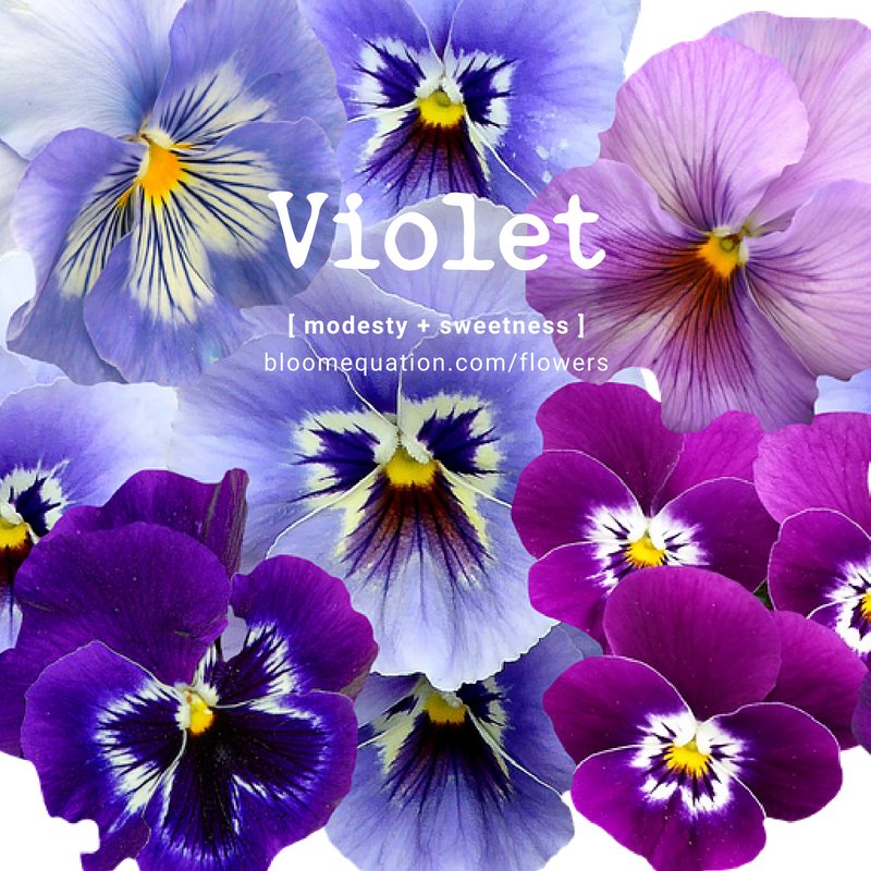Violet- modesty and sweetness
