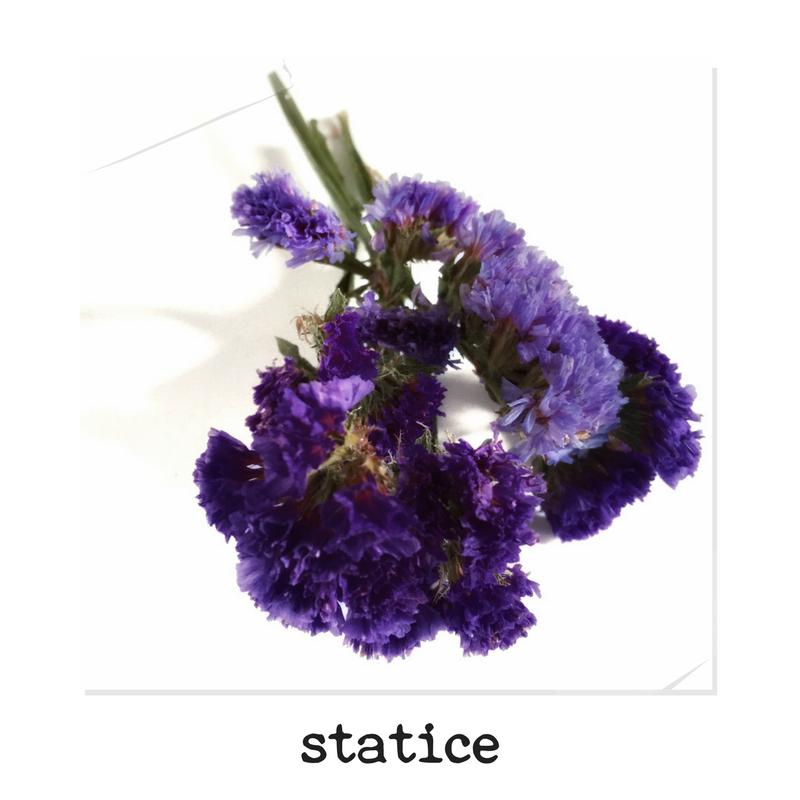 best long lasting dried flowers