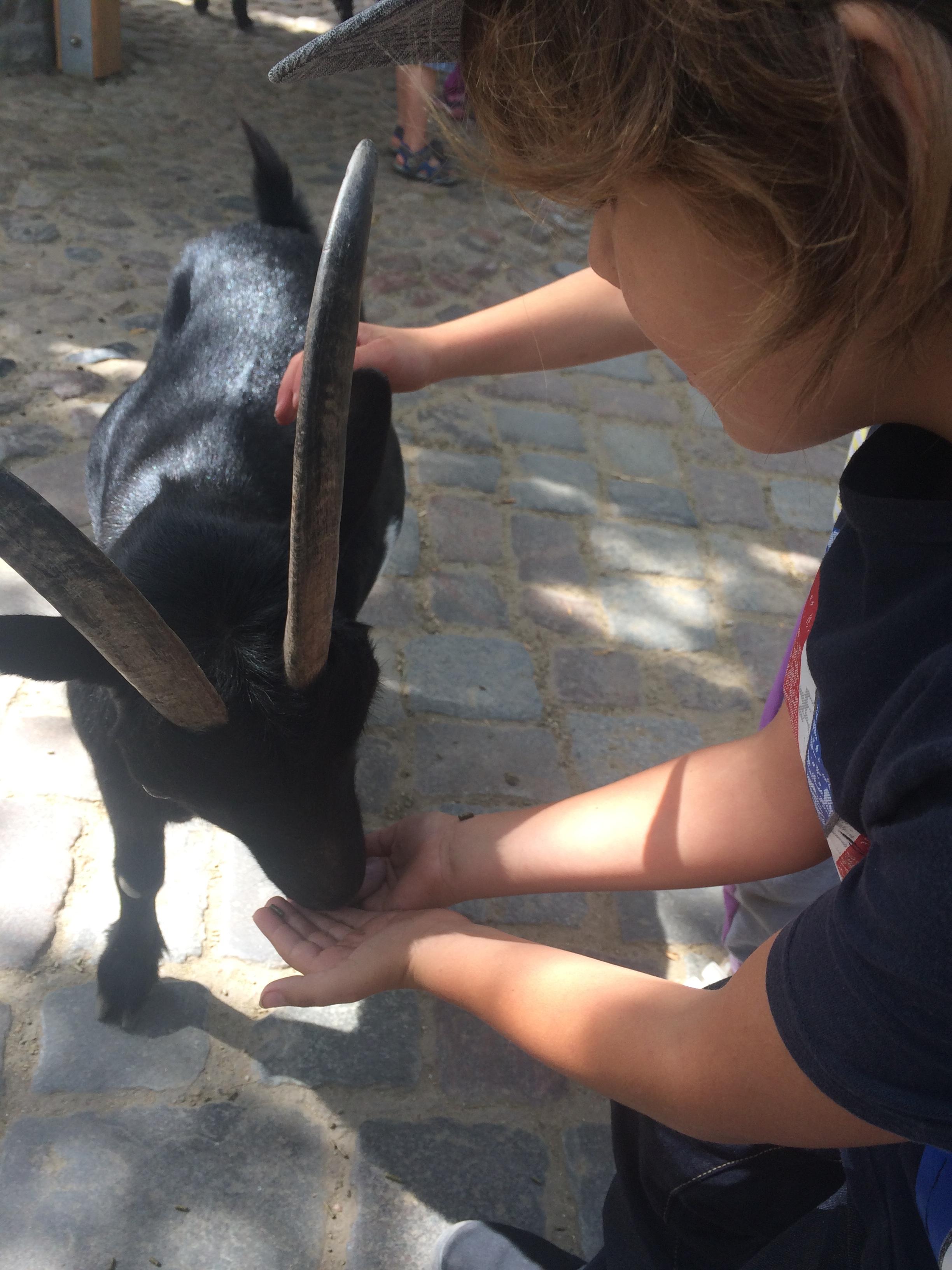 i fed a sheep and a goat the sliva felt weird