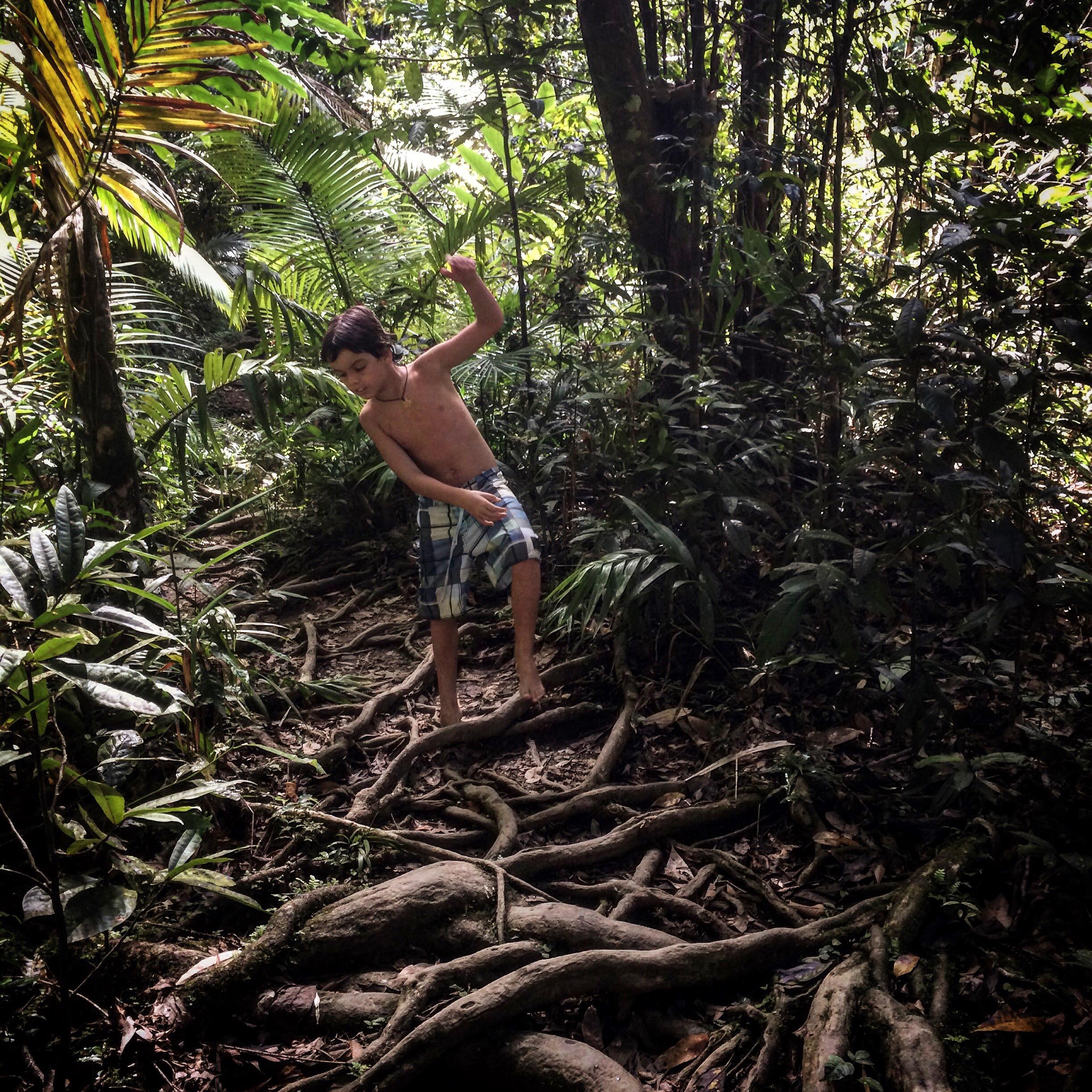 Explore the Daintree Rainforest, just north of Port Douglas