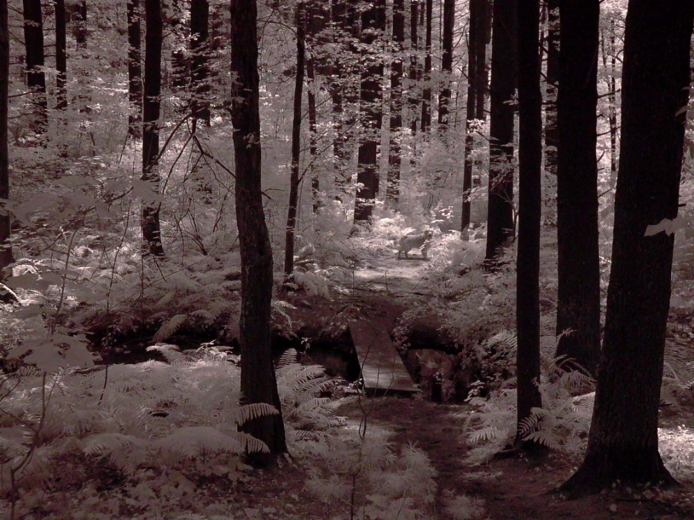 Infrared photograph - Haynes Meadow