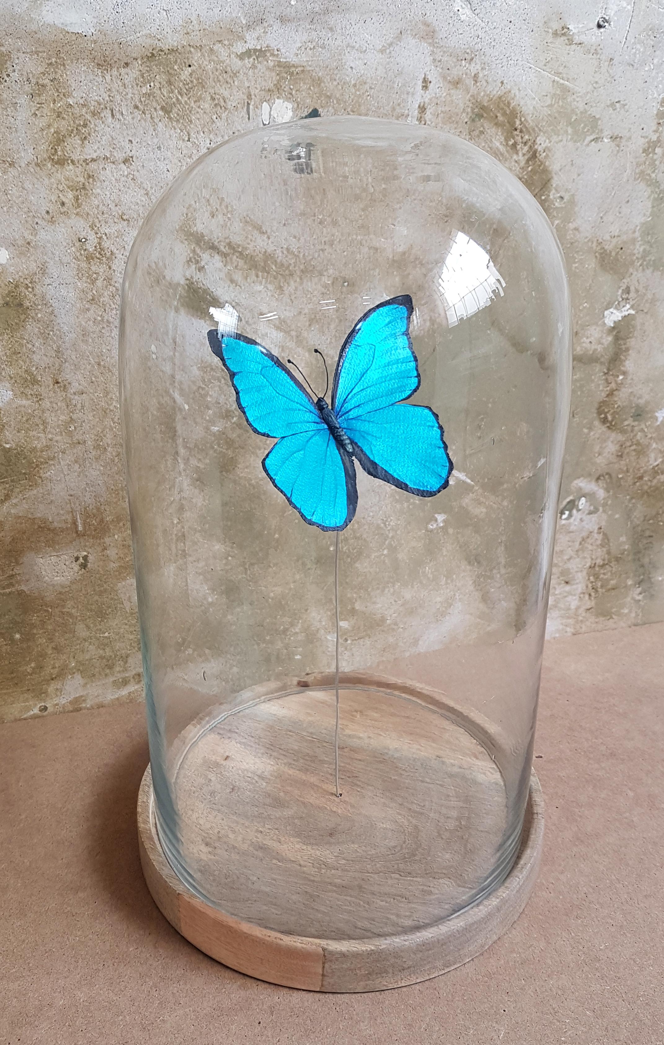 blue morpho3.jpg