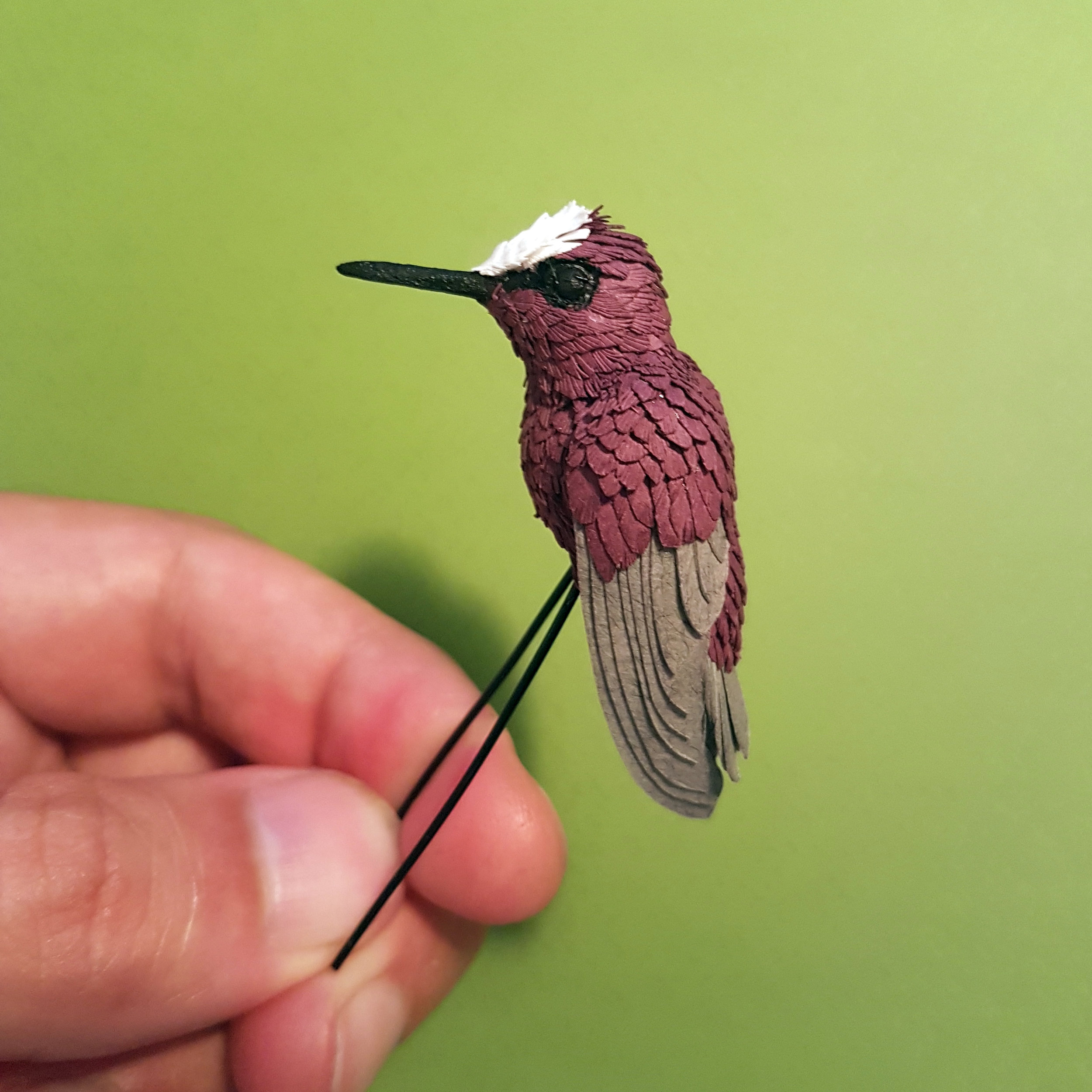 One of the smallest species of hummingbird is this one, The Snow capped.