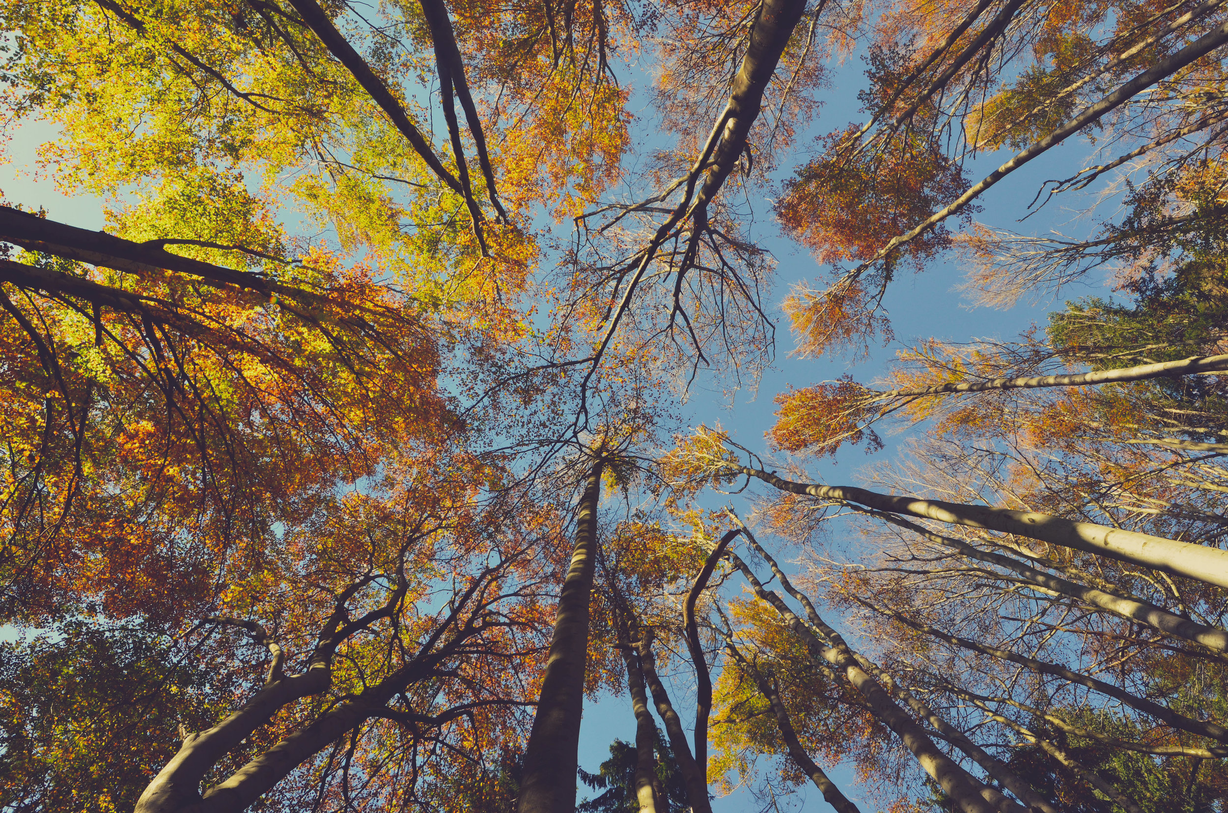 tree_sessions_Ales_Krivec.jpeg