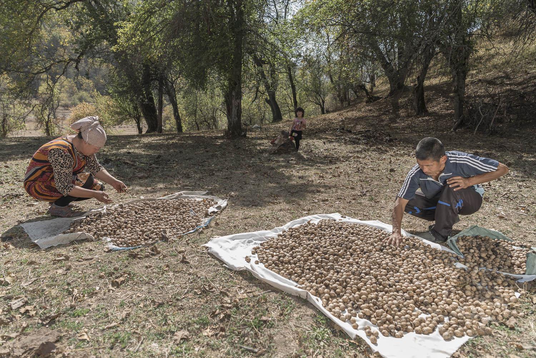 walnut-drying-kyrgyzstan-arslanbob-jo-kearney-photography-photographer-cheltenham-video.jpg