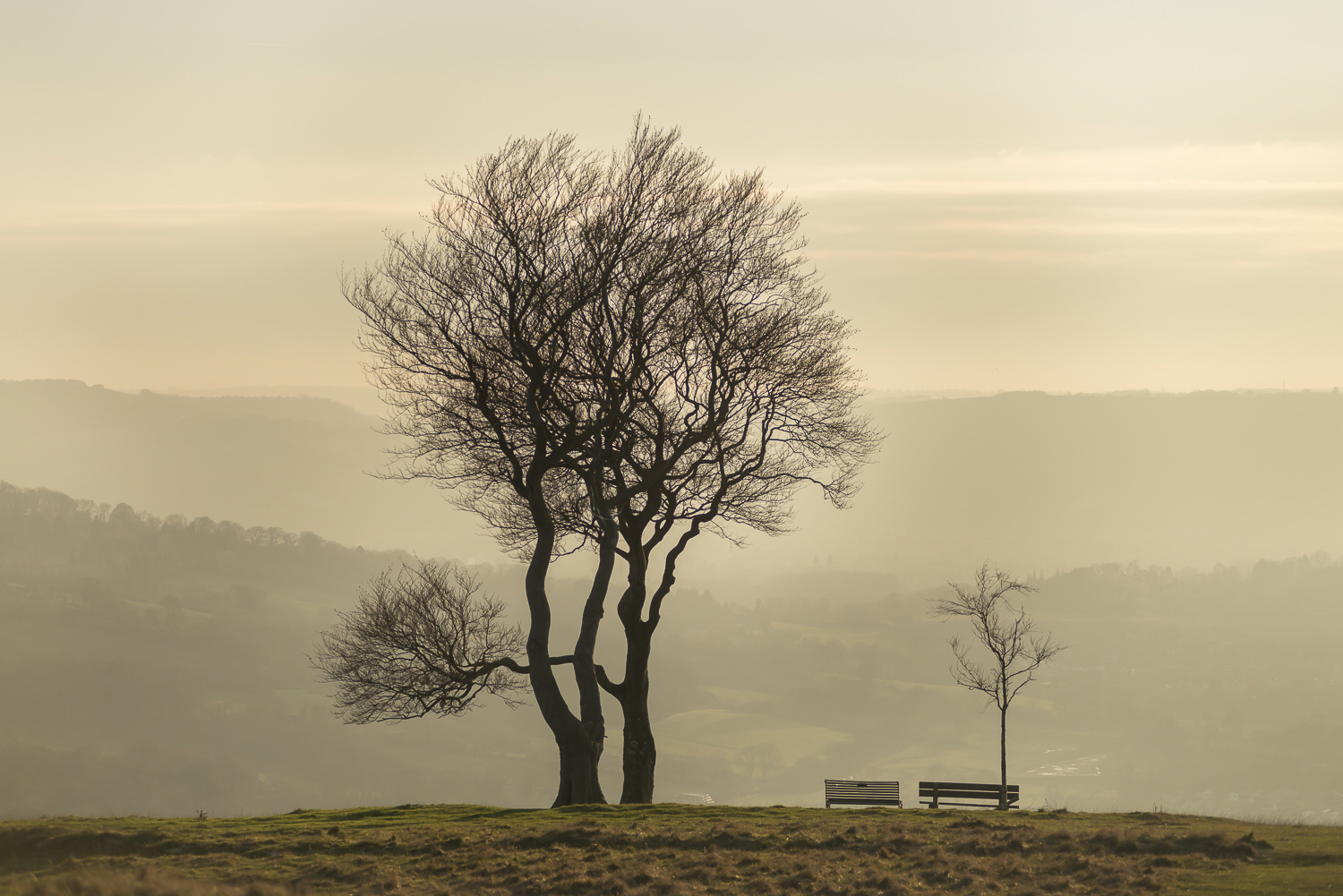 trees-Cleeve-Hill-winter-Gloucestershire-Jo-Kearney-photos-landscape-photography-video-landscapes.jpg