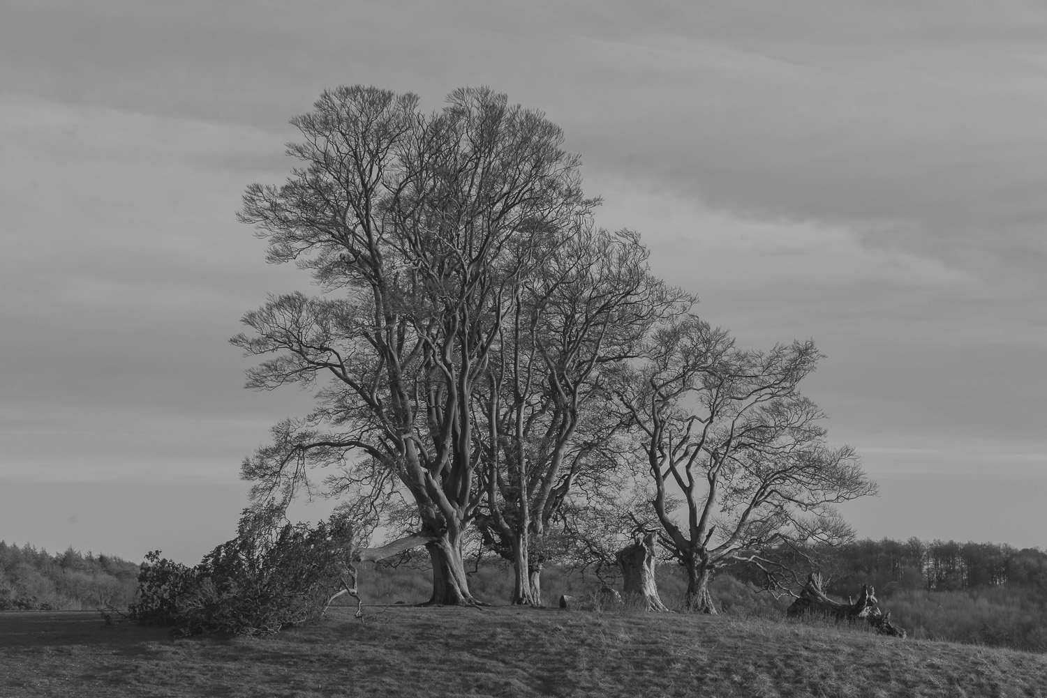 winter-trees-Stanway-Gloucestershire-Jo-Kearney-photos-landscape-photography-video-landscapes.jpg