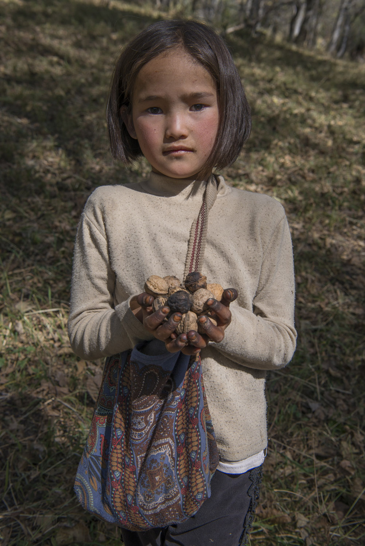 walnut-picking-arslanbob-kyrgyzstan-jo-kearney-photography-video-photographer-cheltenham.jpg