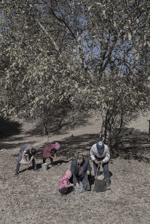 walnut-picking-kyrgyzstan-Arslanbob-family-jo-kearney-photography-video.jpg