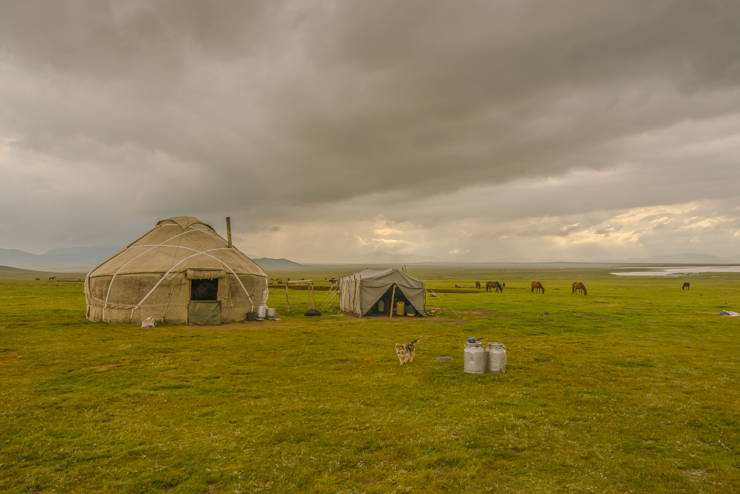 jo-kearney-photography-video-kyrgyzstan-nomads-milking-mares-yurt-song-kul-lake.jpg