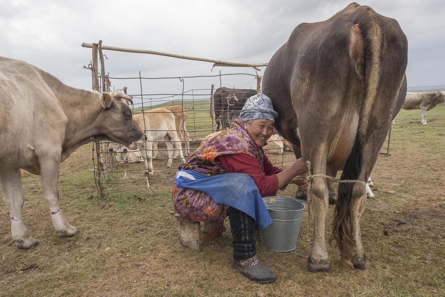 woman-milking-jo-kearney-photography-video-kyrgyzstan-nomads-milking-donkeys-photos-for-sale.jpg