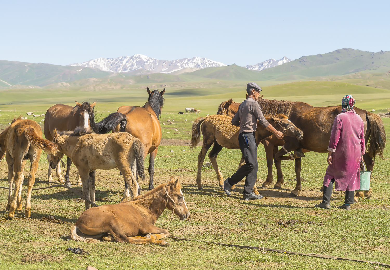 jo-kearney-photography-video-kyrgyzstan-nomads-milking-mares-couple.jpg