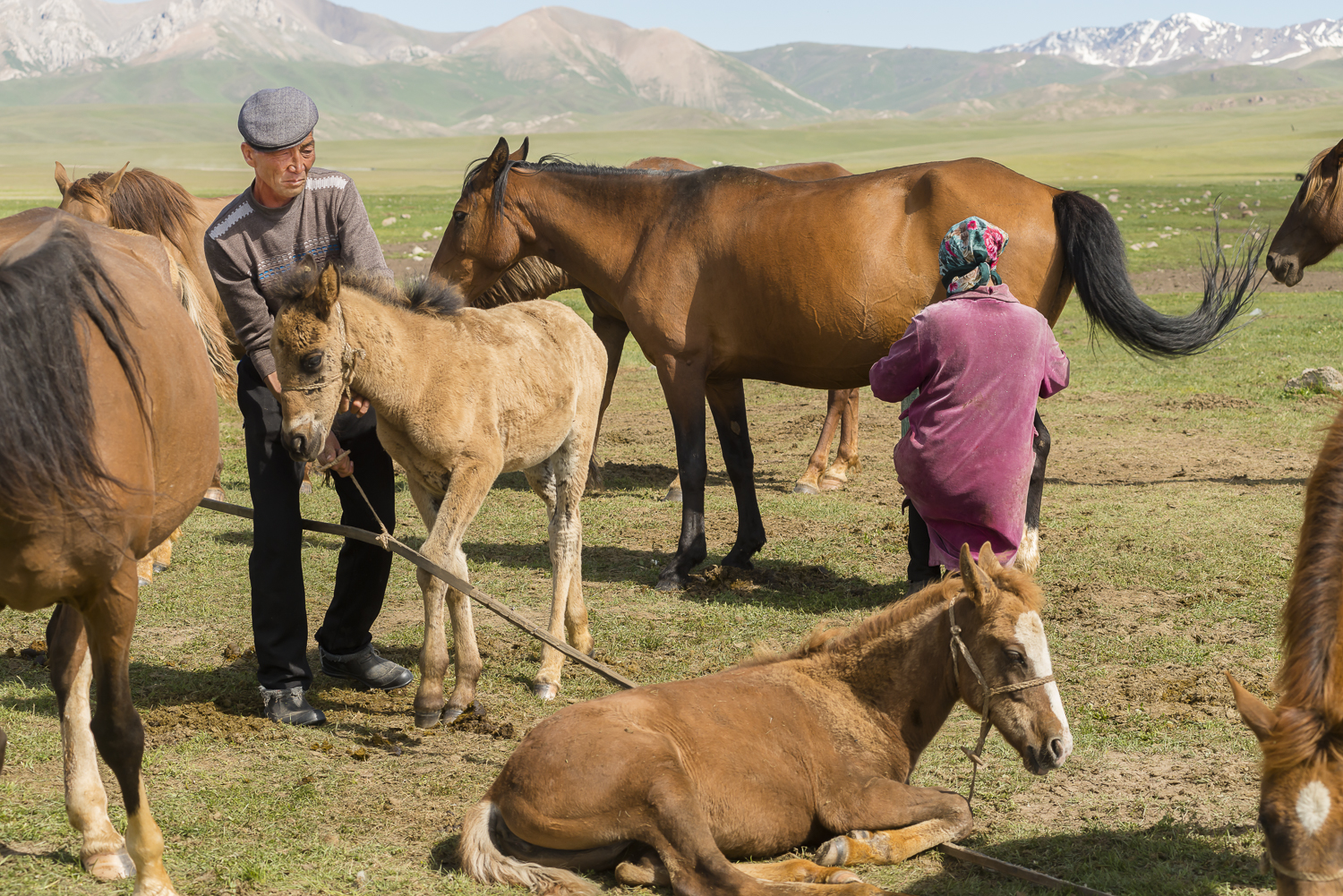 jo-kearney-photography-video-kyrgyzstan-nomads-milking-mares.jpg