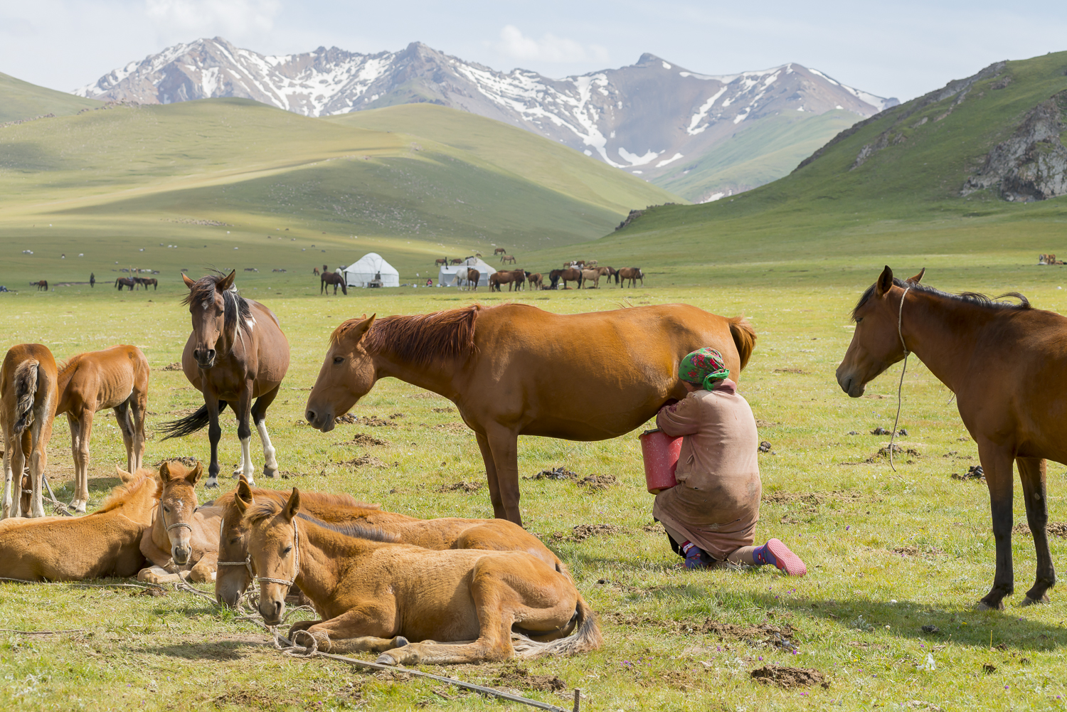 jo-kearney-photography-video-kyrgyzstan-nomads-milking.jpg