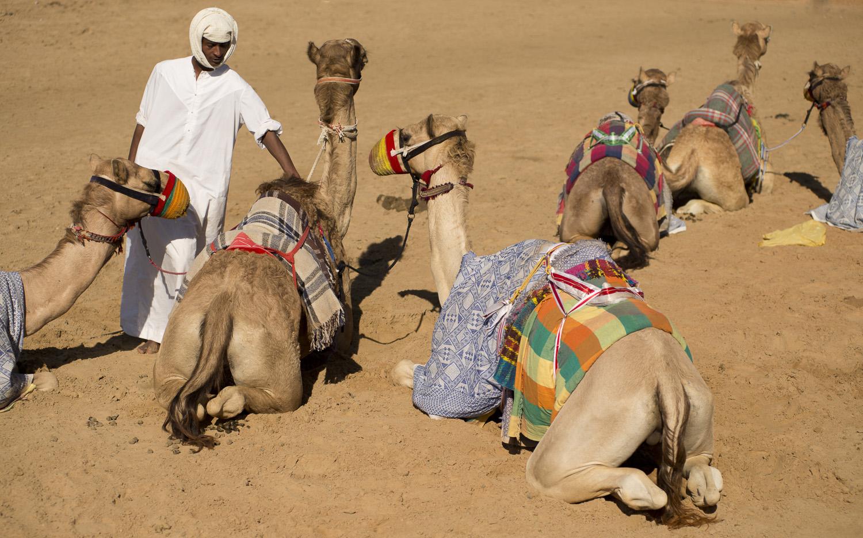 jo-kearney-video-photos-photography-travel-portraits-prints-for-sale-dubai-camels-camel-herder-dubai-UAE-desert-racing-camels.jpg