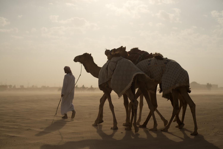 jo-kearney-video-photos-photography-travel-portraits-prints-for-sale-dubai-camels-camel-herder-dubai-UAE-desert-racing-camels-sand.jpg
