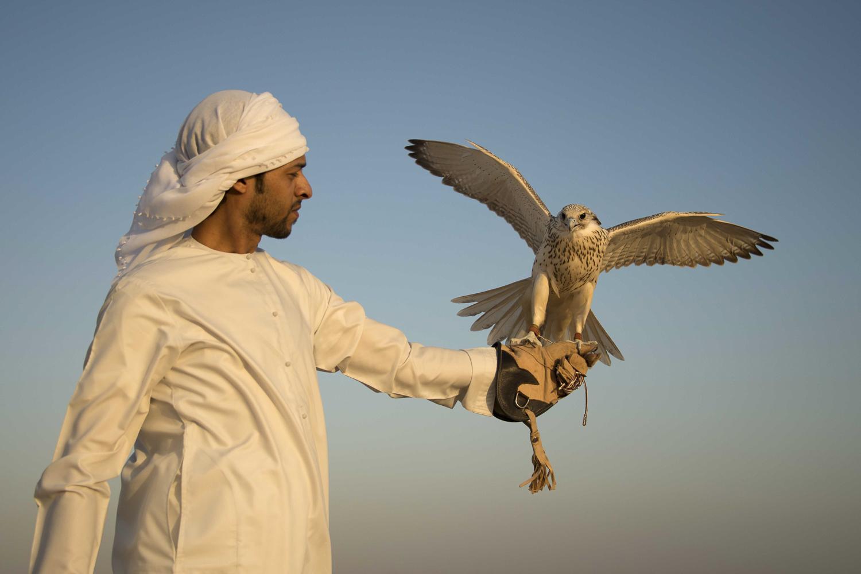 jo-kearney-video-photos-photography-travel-portraits-prints-for-sale-falconry-dubai-desert-falcon-uae-emirati.jpg