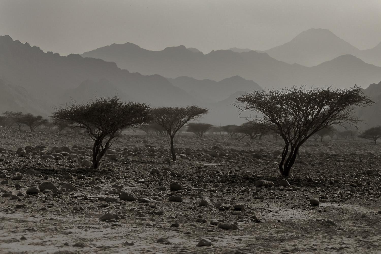 oman-desert-acacia-trees-rocky-scrub-Dibba-Musadam-jo-kearney-video-photos-photography-travel-portraits-prints-for-sale.jpg