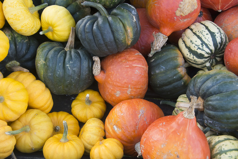 pumpkins-Gloucestershire-Jo-Kearney-photos-landscape-photography-video-landscapes.jpg