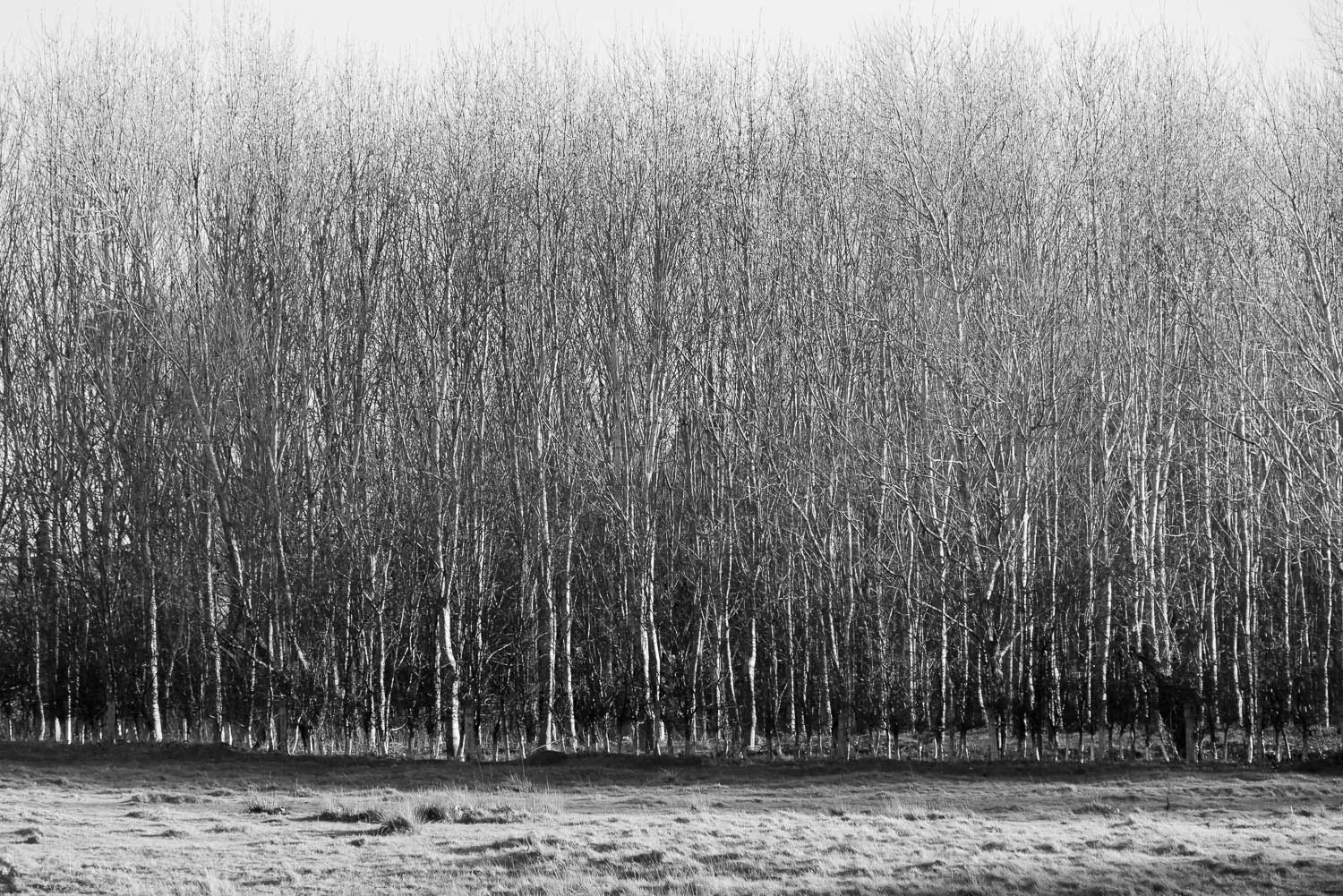 winter-trees-rows-Gloucestershire-Jo-Kearney-photos-landscape-photography-video-landscapes.jpg