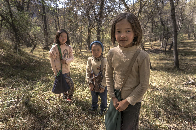 walnuts-picking-kyrgyzstan-child-arslanbob-soviet-union-russia-children.jpg