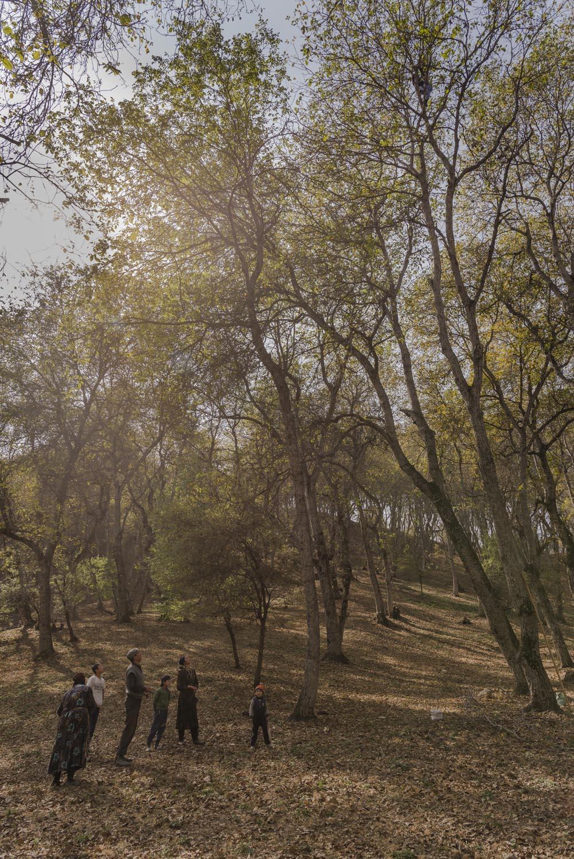 walnuts-picking-kyrgyzstan-child-arslanbob-soviet-union-russia-picnic-camping-family-climbing-tree-walnuts.jpg