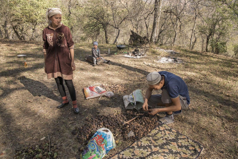 walnuts-picking-kyrgyzstan-child-arslanbob-soviet-union-russia.jpg