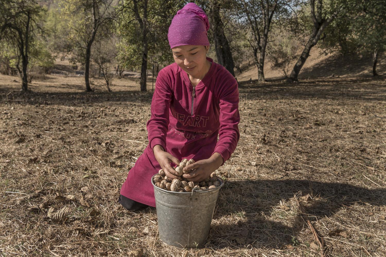 walnuts-picking-kyrgyzstan-child-arslanbob-soviet-union-russia-picking-walnuts.jpg