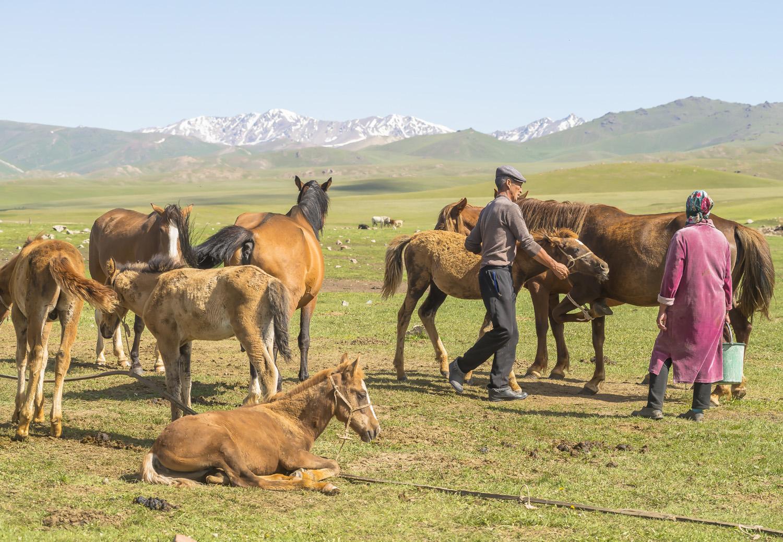 kyrgyzstan-nomads-lake-song-kul-jo-kearney-video-photography-soviet-kyrgyz-milking-mares-couple.jpg