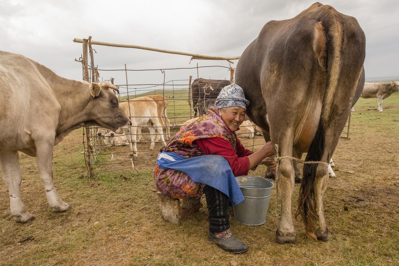 kyrgyzstan-nomads-lake-song-kul-jo-kearney-video-photography-soviet-yurt-family-camping-milking-cows-woman-kyrgyz.jpg