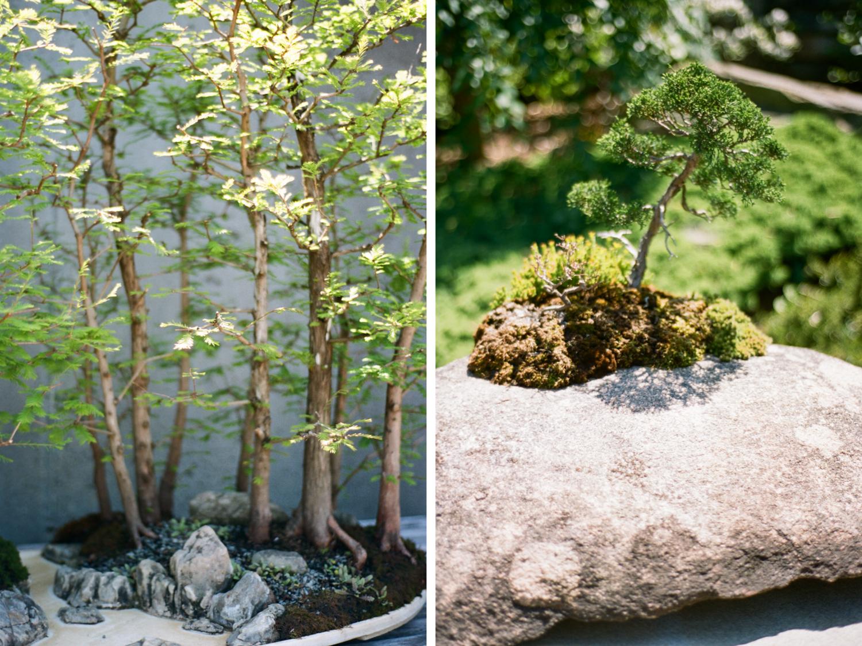 Bonsai exhibit at the Asheville Arboretum