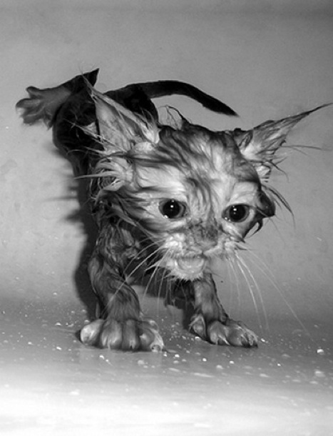 Somethings are just not meant to be wet.