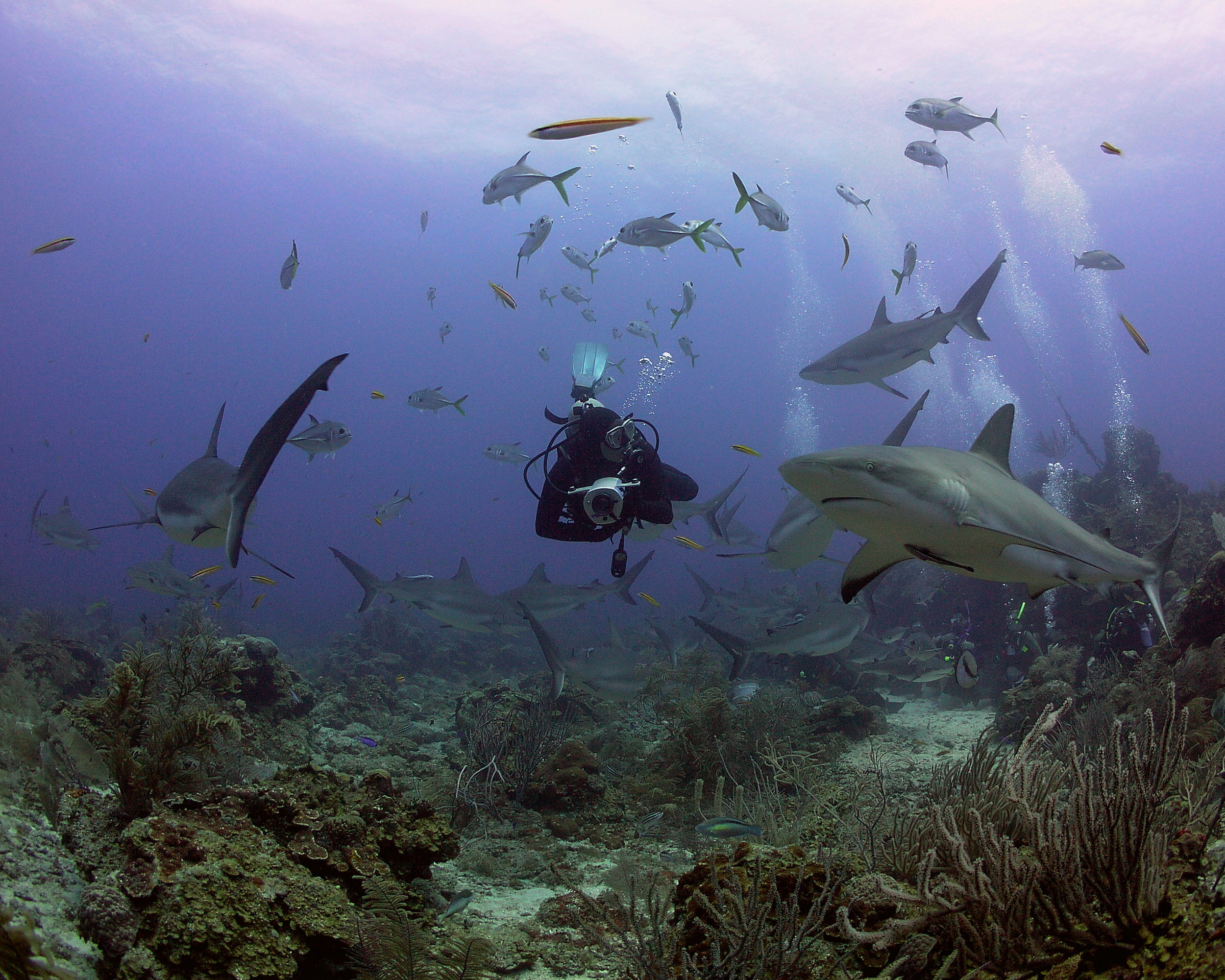 Stay and Shark Dive