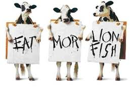 9 out of 10 bovines support Lionfish eradication, and cuisine.