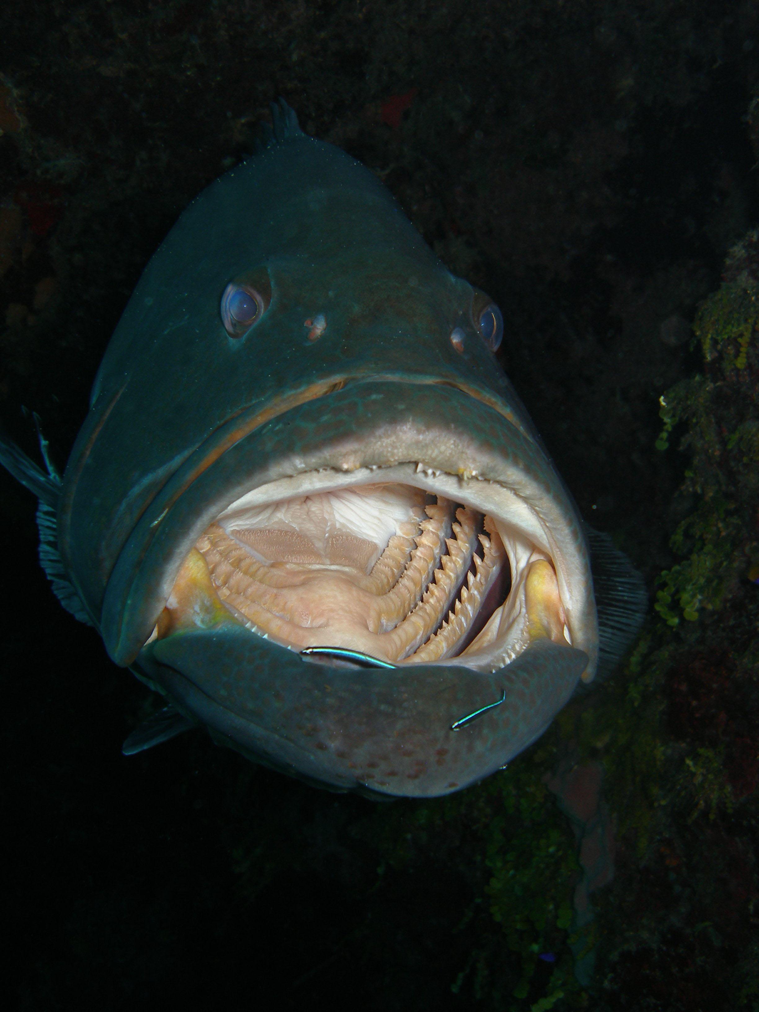 Grouper - Photo - Mickey Charteris