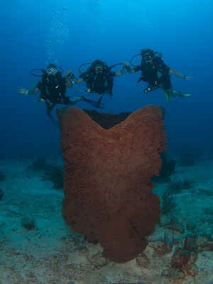 This Giant Barrel Sponge is estimated to be close to a thousand years old. A true underwater national treasure. - Image  Mickey Charteris