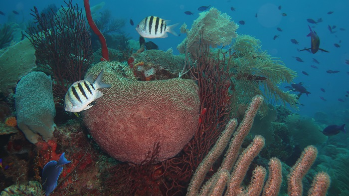 Roatan Coral Reef