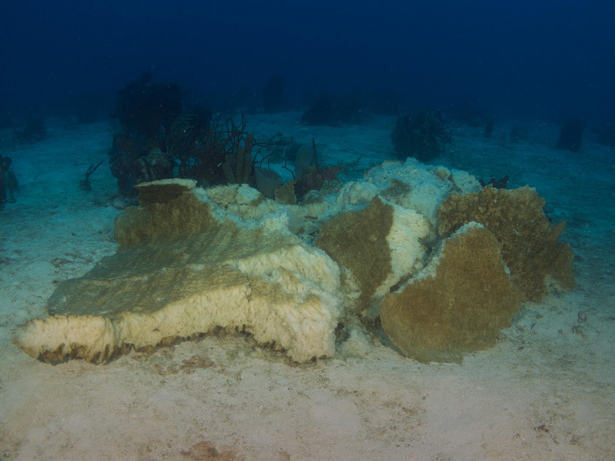 The end of The Big Sponge. Image -  Mickey Charteris