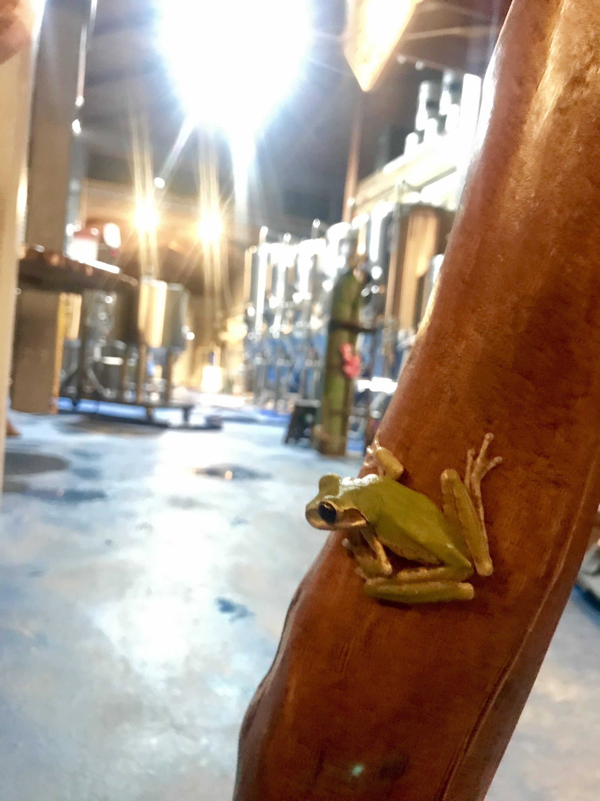 Infamous Brew Frog
